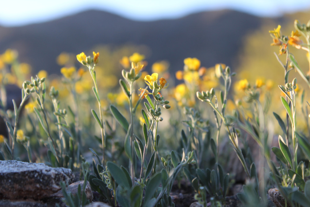 Flowers at South Mountain