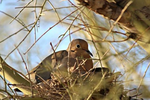 Bird in Hiding